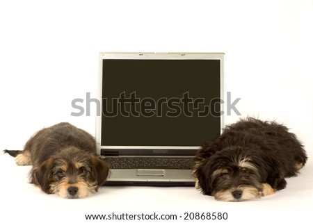 Two cute puppies brothers and a laptop