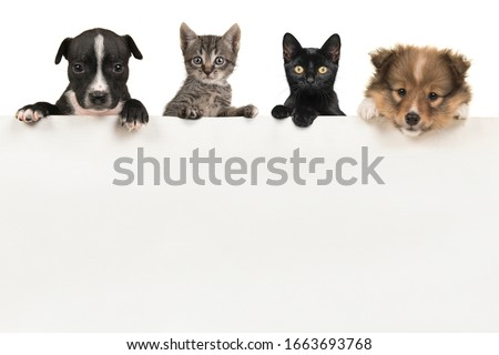 Two cute puppy dogs and two kittens hanging over a white wooden board with space for text on a white background