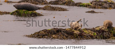 Two cute seals on rocks at the front of the picture and one lying on another rock to the side
