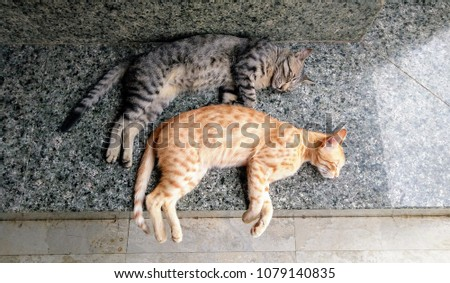 Two cute sibling cats sleeping on the bench #1079140835