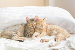 Two cute Thai cats Sleeping on the bed And warm morning light