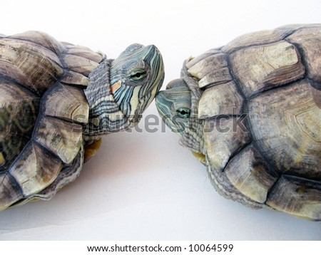 Two Cute Tortoises