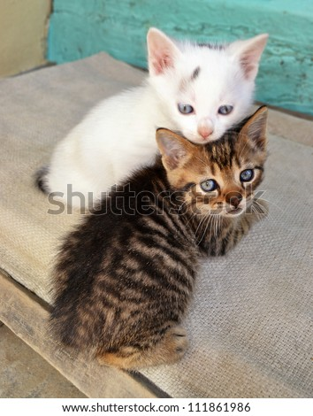 Two cute white and brown kittens playing on a porch.