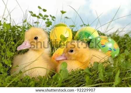 Two cute yellow easter ducklings in grass with colorful easter eggs