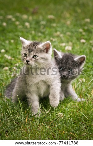 Two cute young cats