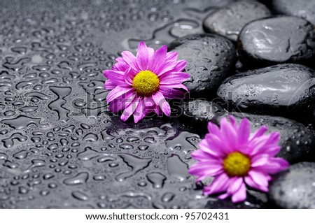 Two daisy flowers with zen stones on wet background