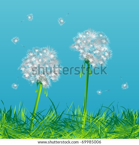 Two dandelions in the wind