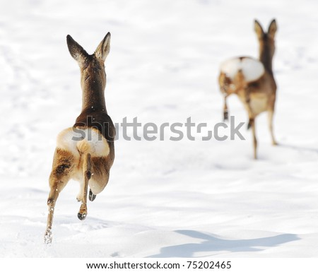 Two deers running on snow