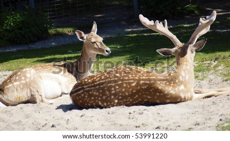 two deers sitting in the natur
