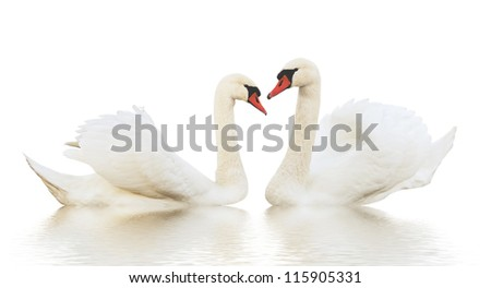 Two different swans on the ripple surface.