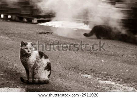 two dirty homeless cats warms themselves in industrial steam