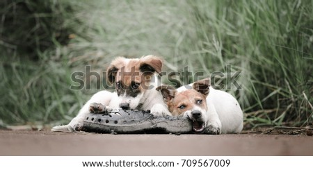 d3a580f2 Dog shoes Images and Stock Photos - Page: 2 - Avopix.com