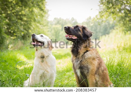 Two dog friends