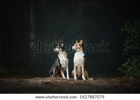 Two dog friends in the forest. Smooth collie. Impressive dog pictures. Dogs in the forest.