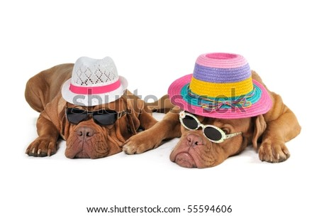 Two Dog in Beach Hats enjoying the Sunshine
