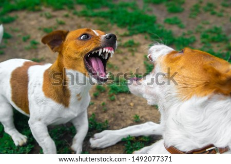 two dogs are fighting on the street. Agressive dogs. Dog attack. Stock photo ©