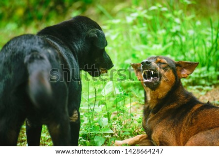 Two dogs are in fierce emotions.  #1428664247