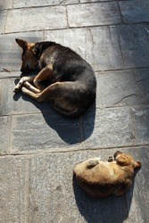 Two dogs are sleeping on the floor, on the street