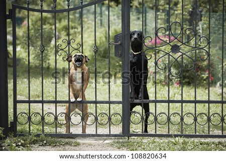 Two dogs behind metal fence.