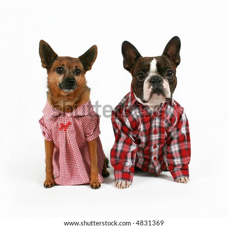 two dogs dressed up like a couple