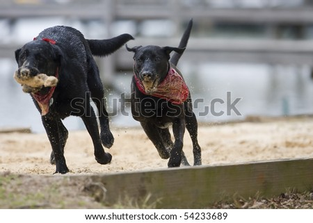 Two dogs enjoy playing with a stick at a park