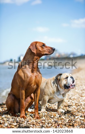 Two dogs friends staying on the beach shore