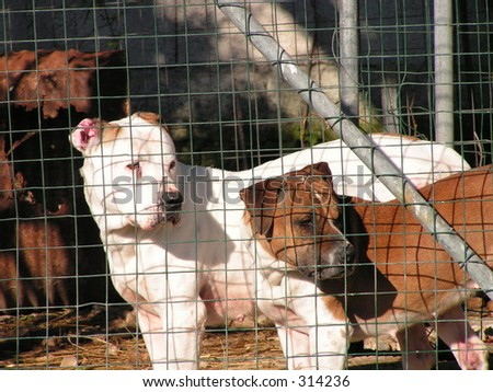 Two dogs in Captivity