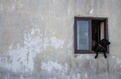 Two dogs in open window. Pets waiting for owner. Dogs in window of old concrete house. Domestic animals concept.