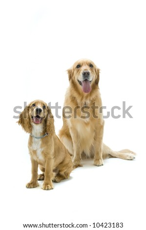 Two dogs in the studio together