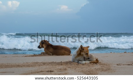 Two dogs lay on the ocean. Quarrel. Dogs have turned away from each other.