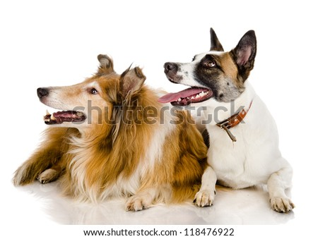 two dogs look to the left . isolated on white background - stock photo