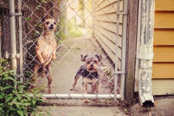 Two dogs looking through a fence