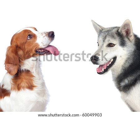 Two dogs of different breeds isolated on white background