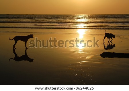 Two dogs on the beach of the Indian ocean at sunset.