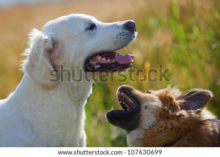 two dogs play outdoors
