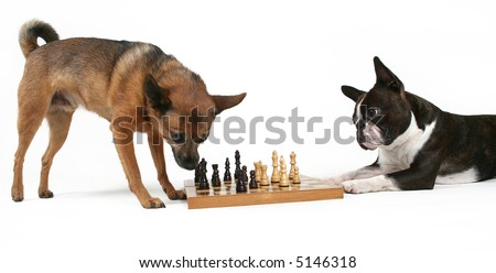 two dogs playing a game of chess
