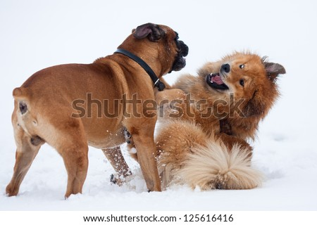 two dogs playing frolic in the snow
