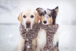 Two dogs sitting in snow next to each other and wearing a scarf