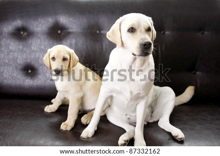 Two dogs sitting, isolated on black background