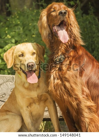 Two dogs sitting on a bench and look to the owner