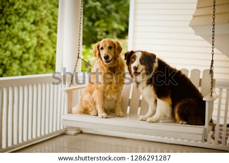 Two dogs sitting together on a porch chair. #1286291287