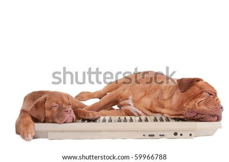 Two dogs sleeping tired after a 4 paw piano concert - stock photo
