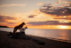 Two dogs stand on a log against the backdrop of sunset at sea. red Nova Scotia Duck Tolling Retriever and a Jack Russell Terrier