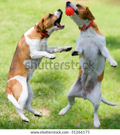 two dogs with ball