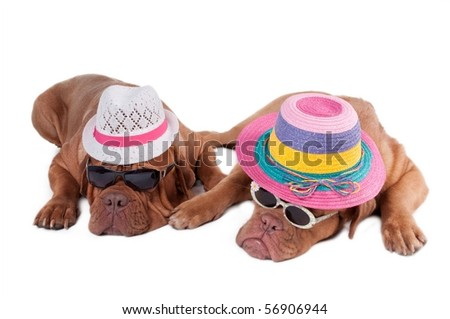 Two dogs with summer hats and sunglasses ready for holiday