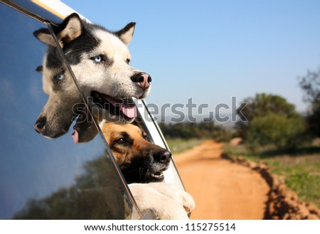 Two dogs with their heads out the window enjoying a car ride