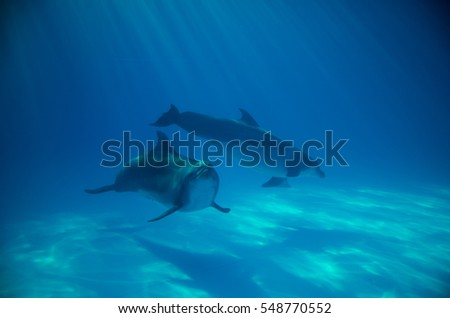 Two dolphins  #548770552
