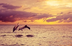 two dolphins in the background of a beautiful sunset