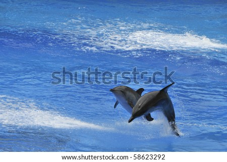 Two Dolphins jumping out of the water - stock photo