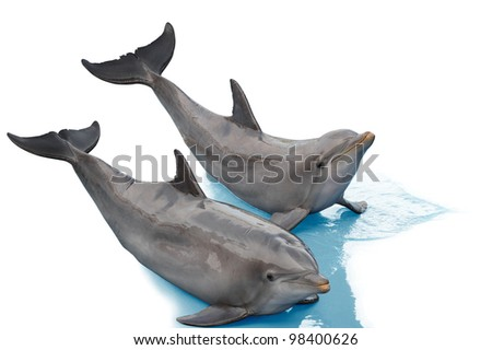 Two dolphins lying together